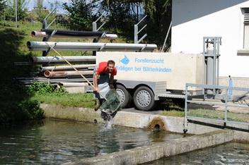 Fischtransport forellenzucht kr iligen for Teichreinigung mit fischen